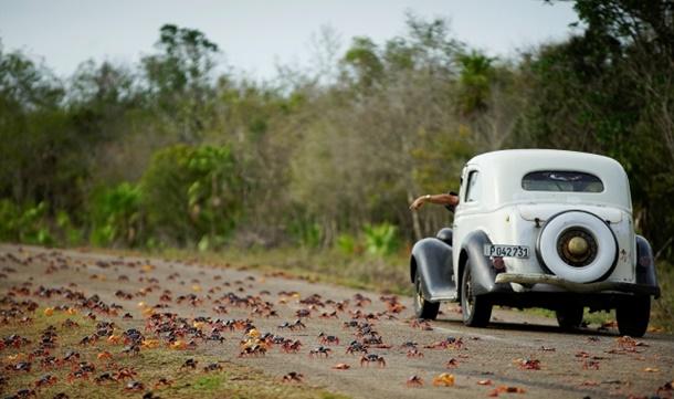 Küba'da Büyük Kırmızı Göç