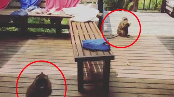 Tayland Tatilindeki Tuba Ünsal'a Maymun Sürprizi